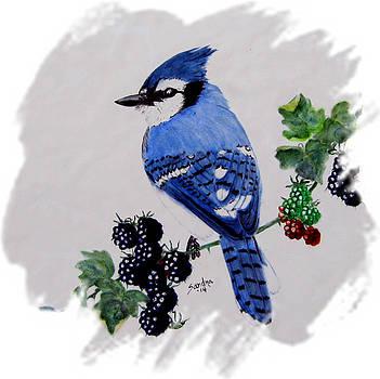 Blue Jay and Blackberries by Sandra Maddox