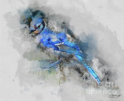 Blue Jay by Chuck Styles
