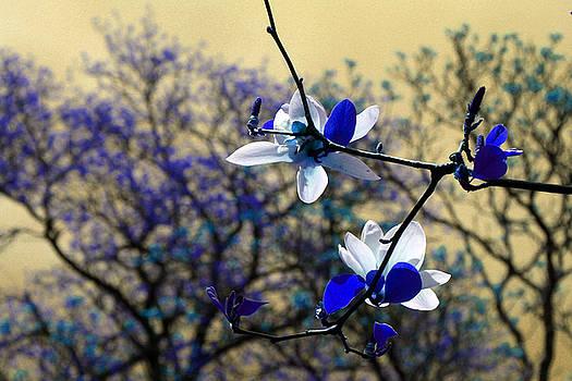 Carolyn Stagger Cokley - blue magnolia