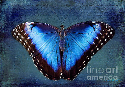 Blue Morpho Butterfly by Barbara McMahon