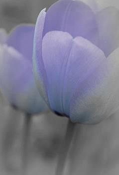Blue Pastel Tulips by The Art Of Marilyn Ridoutt-Greene