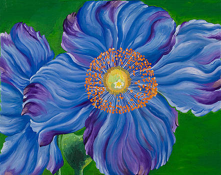 Blue Poppies by Sweta Prasad