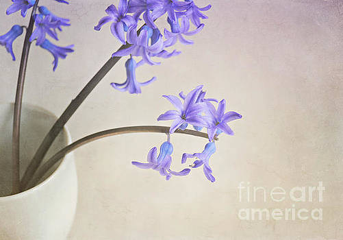 Blue purple flowers in white china cup by Lyn Randle