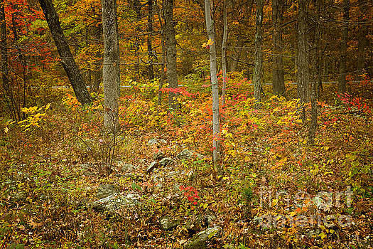 Blue Ridge Parkway at Humpback Rocks Visitor Center by Louise Heusinkveld