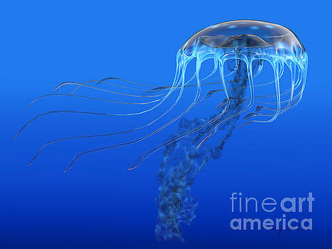 Corey Ford - Blue Spotted Jellyfish