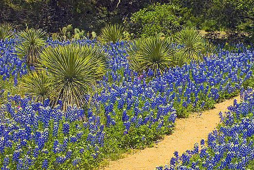 Blue Trail by Robert Anschutz