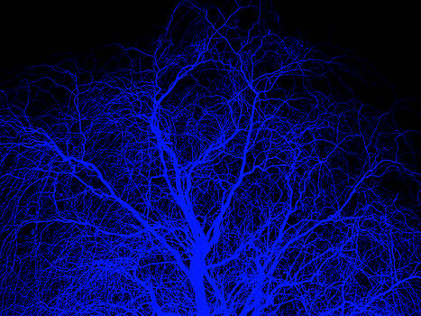 Blue Willow by Robert Geary