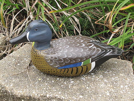 Blue-Winged Duck by Kevin F Heuman