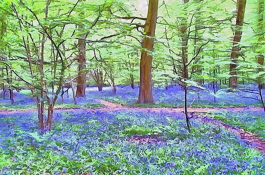 Bluebell Wood by Bishopston Fine Art