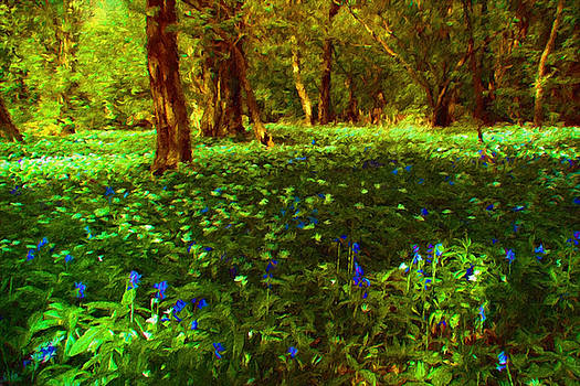 Bluebells and Wood Anemones. by ShabbyChic fine art Photography
