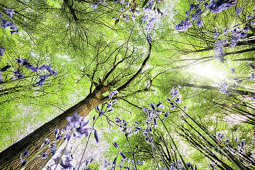 Bluebells from worms eye view by Simon Bratt Photography LRPS