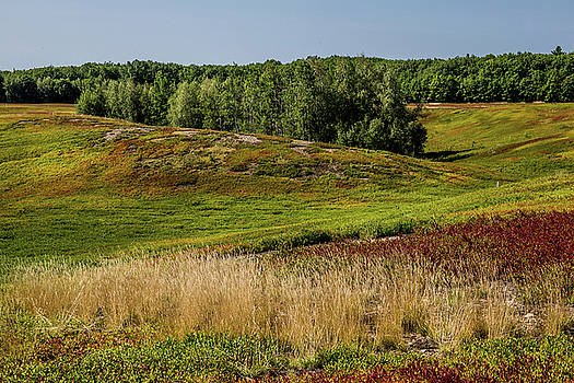 Blueberry Fields Forever by Brent L Ander
