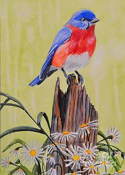 Bluebird and Daisies by John W Walker