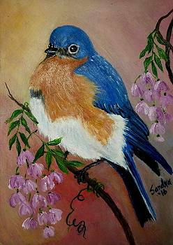 Bluebird of Spring by Sandra Maddox