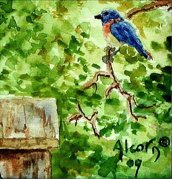 Bluebird by Scott Alcorn