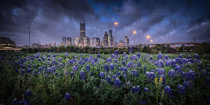 Bluebonnet Houston by Chris Multop
