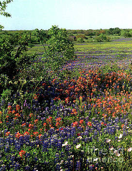 Bluebonnets and Wildflowers 4 by Ruth Housley