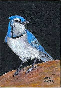 Bluejay by Peggy Conyers