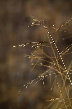 Blurry Grass by Nikki McInnes