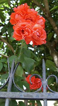 Blushing Flower by Dan Olson