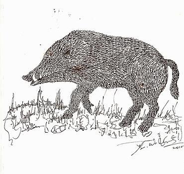Boar by Umesh U V