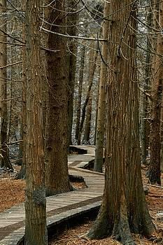Boardwalk Among Trees by Scott Holmes