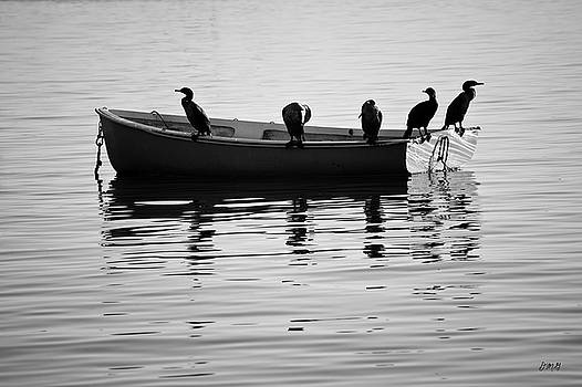David Gordon - Boats and Cormorants Plymouth Harbor BW