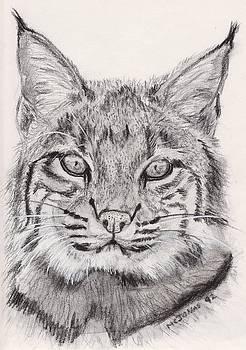 Bobcat by Marqueta Graham
