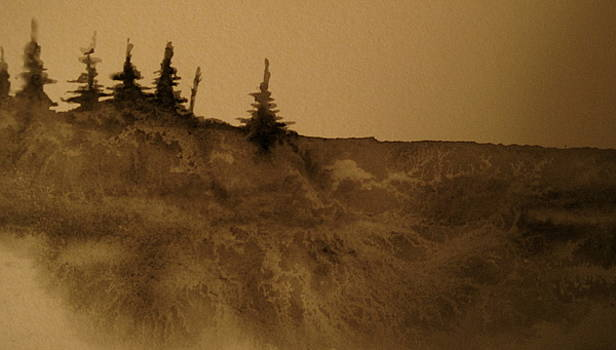 Bodega Head by Jeff DOttavio