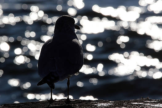 Bokeh Gull by Jim Nelson