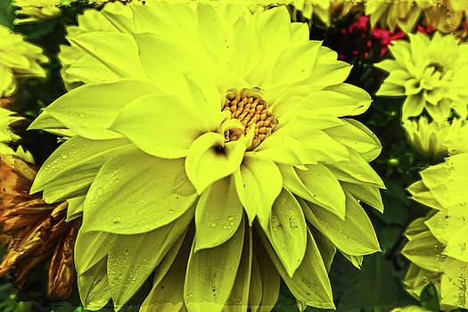 Bold and Bright Yellow by Judy Hall-Folde