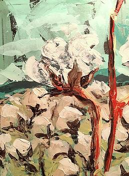 Boll and Branch by Susan E Jones
