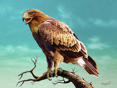 Booted Eagle  by Anthony Mwangi