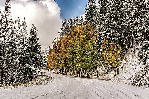 Boreas Pass Road Aspen and Snow by Stephen Johnson