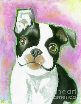Boston Terrier by Aaron Koster