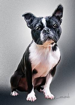 Michael Spano - Boston Terrier by Spano