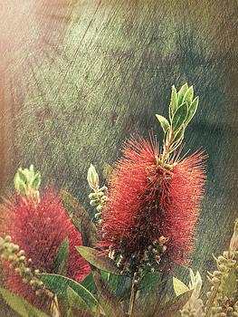 Bottle Brush Plant by Lynn Bolt