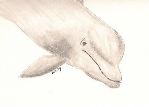 Bottlenose Dolphin by Kristen Hurley