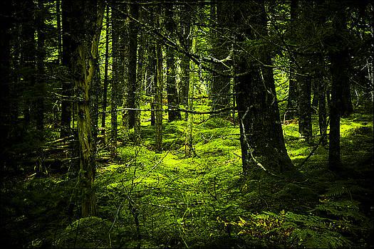 Bottom of the Forest Floor by Nora Blansett
