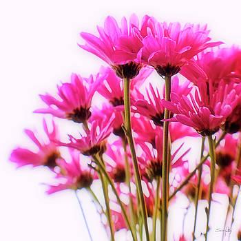 Scott Pellegrin - Bouquet of Chrysanthemums