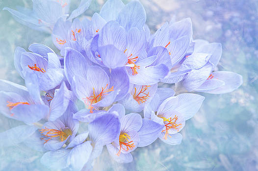 Bouquet of Crocuses by Jenny Rainbow