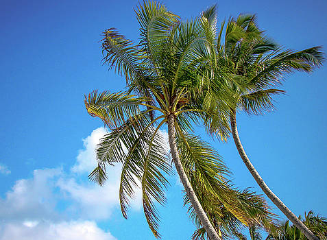 Jenny Rainbow - Bowing Palm Trees and Blue Sky
