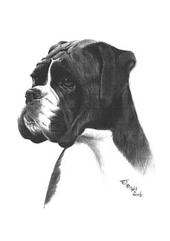 Boxer dog by Ed Teasdale