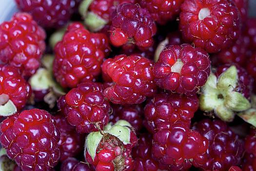 Boysenberry Delight by Kathy Clark