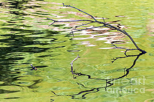 Kate Brown - Branch Reflections II