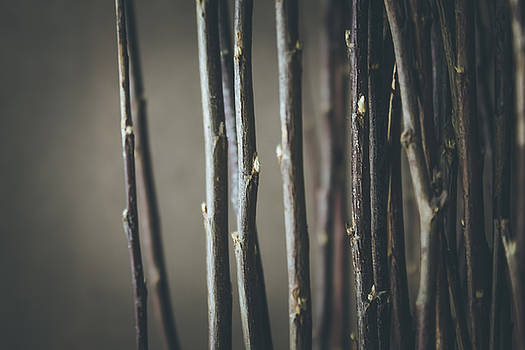 Branches by Cindy Grundsten