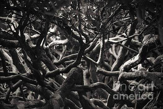 Branches in Monochrome by Liz Alderdice