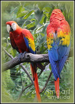 Brazilian Parrots by Dora Sofia Caputo Photographic Art and Design