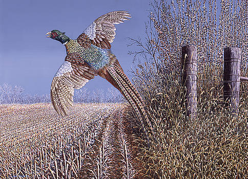 Breakin Out - Ring Necked Pheasant by Craig Carlson