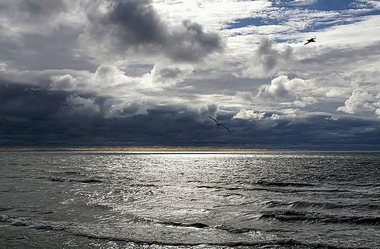 Breezy Beach by Kathi Mirto